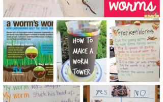 16 Classic and Creative Ways to Teach Worms - Teach Junkie
