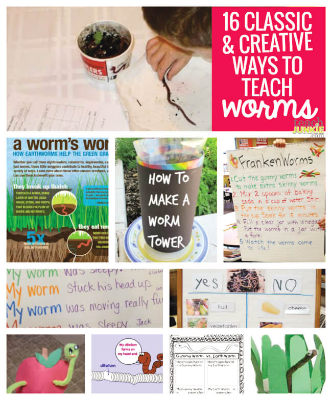 16 Classic and Creative Ways to Teach Worms - Teach Junkie