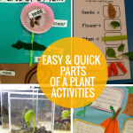 4 Easy and Quick Parts of a Plant Activities
