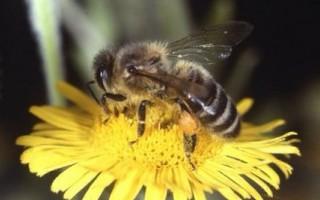 Honeybee Resources - Teach Junkie