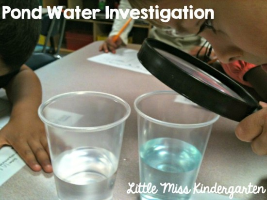 Pond Water Observations and Investigation